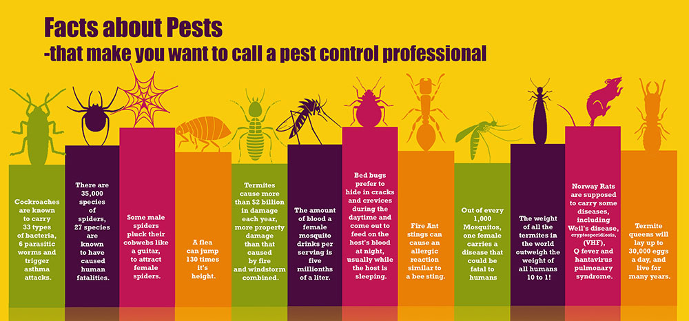 All Out Bed Bug Exterminating Bed Bugs Removal NYC